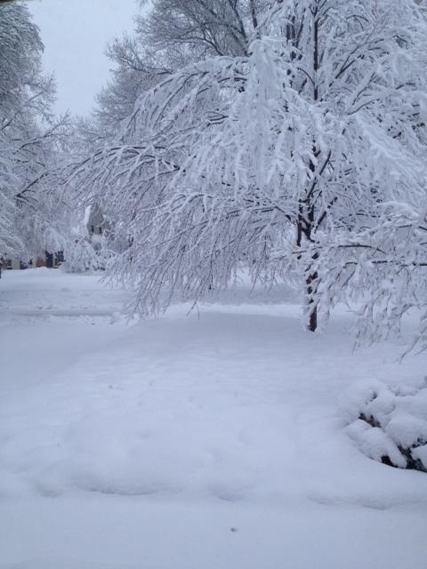 snowfrontview