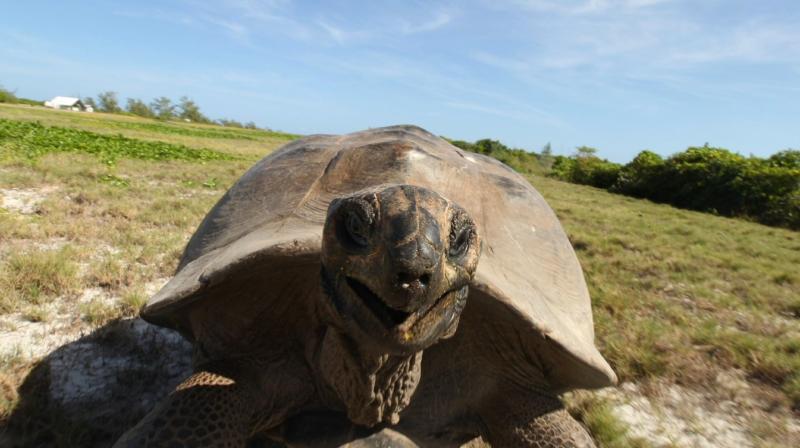 tortoise-chase